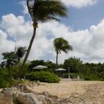 Palmes waving